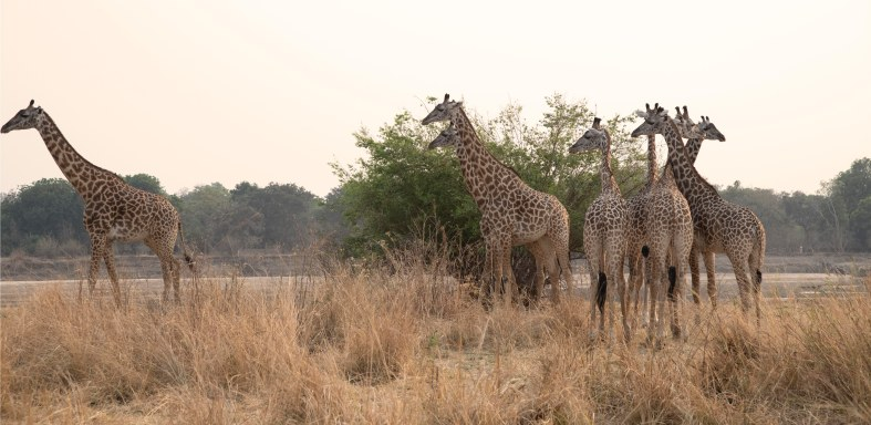There were lots of giraffe always lovely to watch.